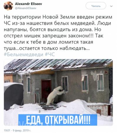 Введён режим ЧС: насевере России нашествие белых медведей (ФОТО, ВИДЕО)