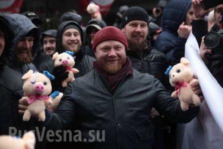Предвыборный треш: Порошенко атакуют розовые свиньи (ФОТО, ВИДЕО)