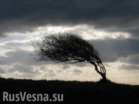 Сорванные крыши и обесточенные сёла: над Украиной пронёсся ураган (ФОТО)