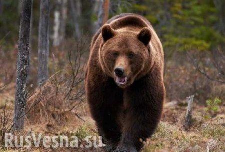 Посол России рассказал американцам о «медведе, вырвавшемся из клетки» (ФОТО)