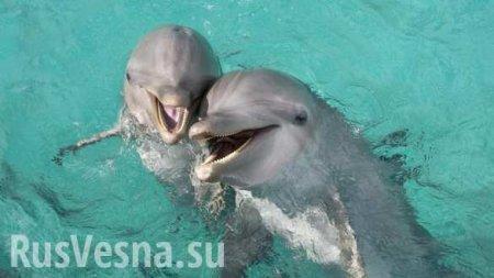 ВСети появились кадры спасения дельфина вСочи (ВИДЕО)