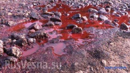 Экологическая катастрофа на Украине: отрава достигла крупных городов двух областей (ФОТО, ВИДЕО)