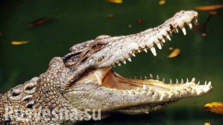 Мёртвый крокодил найден в Черниговской области (ВИДЕО)