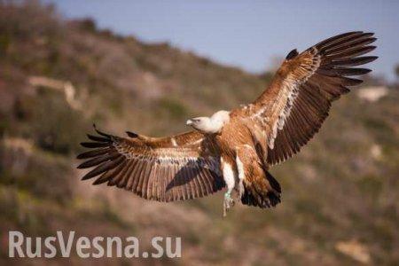 Под Сумамипоймали гигантскую хищную птицу, «прилетевшую изКрыма поесть уток» (ВИДЕО)