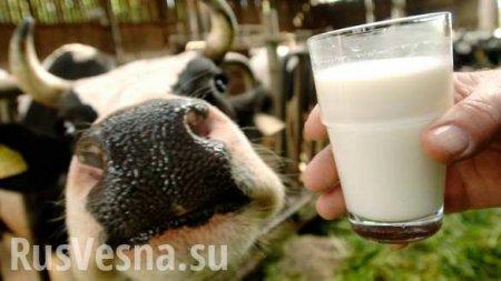 В России вступили в силу новые правила продажи молочных продуктов