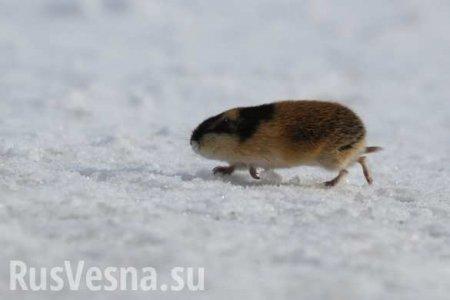 Украина собралась осваивать Арктику