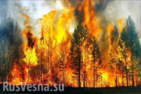 Сто три лесных пожара: После паводка в Иркутскую область пришла новая беда