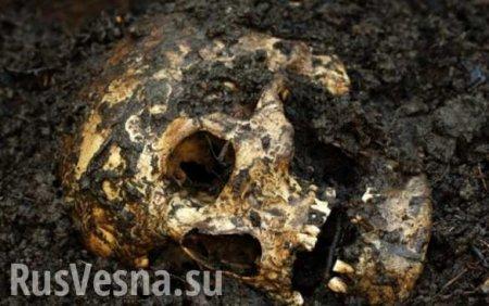 Жуткие кадры: Под Москвой найден труп с отрезаннойголовой (ФОТО, ВИДЕО 21+ ...
