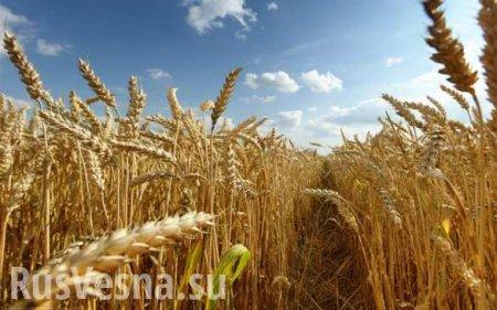 У Зеленского намерены отменить мораторий на продажу сельхозземель