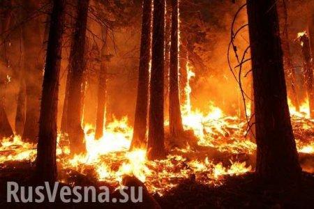 Жириновский назвал причину пожаров в Сибири