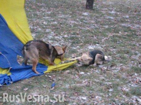 На митинге в Москве произошла потасовка из-за украинских флагов (ВИДЕО)