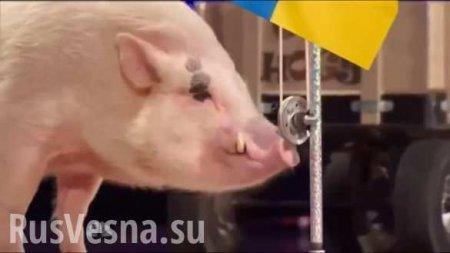 Учёные выяснили, какпоявились современные европейские свиньи