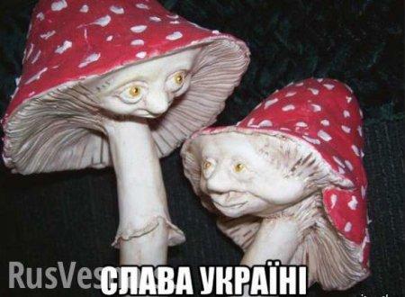 Боевики «Айдара» объелись ядовитыми грибами вместо галлюциногенных: сводка овоенной ситуации наДонбассе