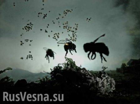 Груз из Британии: 20 млн насекомых вернули из аэропорта Внуково на родину