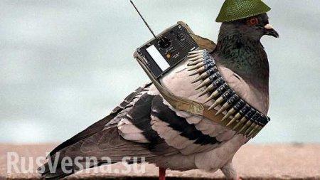 ночь_ЦРУ расскретило документы о подготовке «боевых голубей» для борьбы с СССР