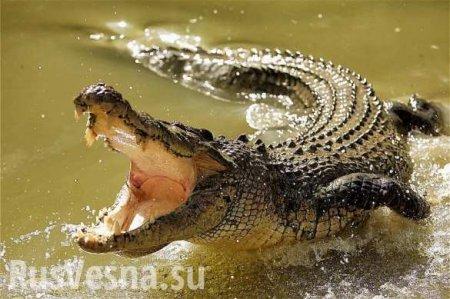Крокодил советского космонавта откусил руку пожилому шведу (ФОТО)