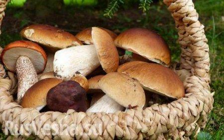 Учёные открыли неожиданную пользу грибов в борьбе с раком простаты