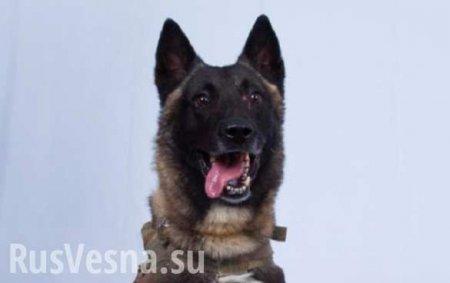 Трамп показал снимок «прекрасного пса», участвовавшего в «ликвидации» главаря ИГИЛ (ФОТО)