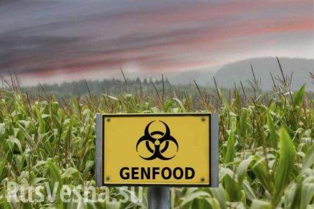 Американская мечта смерти: вСШАобнаружены новые жуткие последствия отГМО