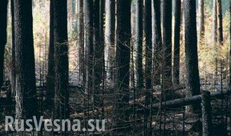Разбитые дороги и уничтоженный американскими танками лес: солдаты из Техаса у границ Белоруссии