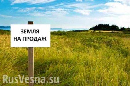 В Кабмине рассказали, сколько будет стоить гектар украинской земли
