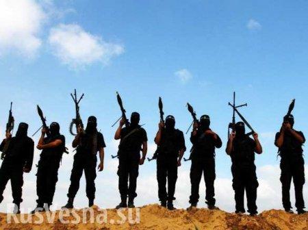 Наглое заявление: ВСШАсчитают, чтоСирия неспособна защитить месторождения нефти отИГИЛ