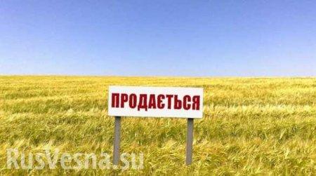 Большинство против: украинцы неподдерживают земельную реформу Зеленского ( ...