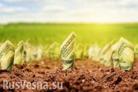 Украинский министр рассказал, сколько денег может принести продажа земли