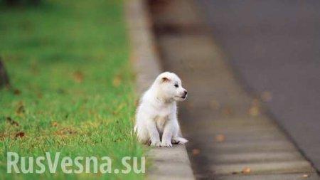 Глава района вХакасии спасал щенка ибылсбит машиной