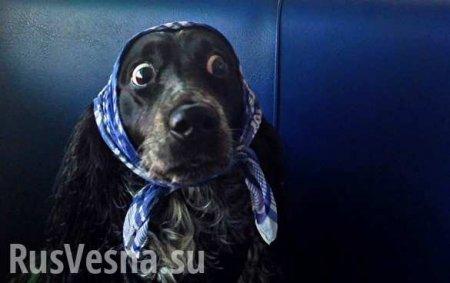 А что, если Россия и Украина не подпишут газовый контракт? (ВИДЕО)