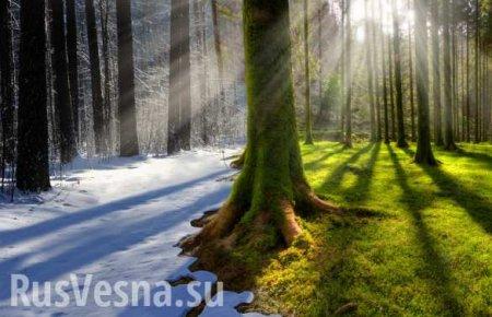 Какая будет погода на Рождество? — большую часть России накрыло аномальное  ...