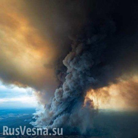 Чудовищные пожары: дым виден из космоса, миллиард животных погиб в Австрали ...