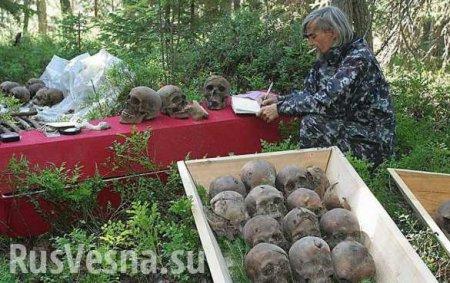 «Тайные могилы и миллионы расстрелянных вМурманской области»: новая шокирующая ложь «Мемориала»