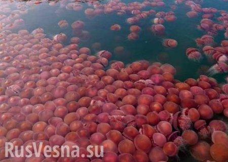 «Морские помидоры» заполонили пляжи Филиппин (ВИДЕО)