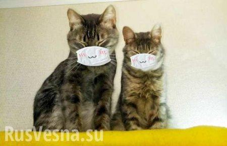 15% кошек заражены новым коронавирусом, — китайские учёные