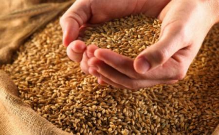 Голод после пандемии: Миру грозит продовольственный кризис