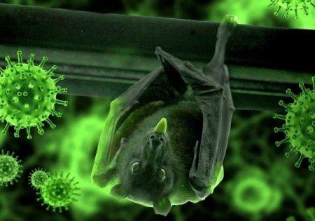 Учёные рассказали, кто мог передать коронавирус человеку: летучие мыши ни п ...