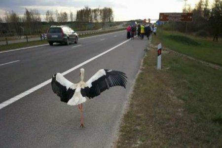 Аист поразил Сеть:птица прилетела на крестный ход и шла12 км с верующими в Белоруссии (ФОТО, ВИДЕО)