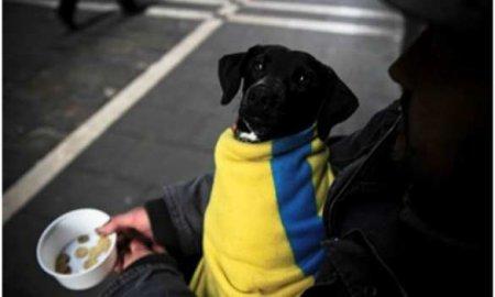 На Украине удвоится число бедных, — ЮНИСЕФ