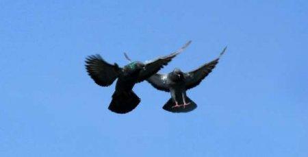 Люди были счастливы: над Луганском взмыли в небо почтовые голуби (ФОТО)