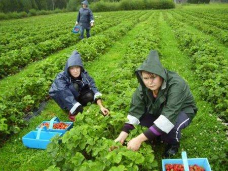 Зрада: МИД Эстонии требует высылки украинских заробитчан