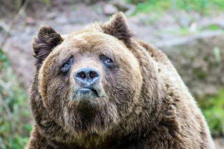 ВЯкутии старушка рычанием отпугнула медведя