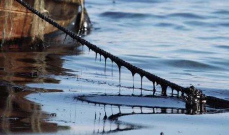 Берег усеян мёртвыми животными: на Камчатке отравлено побережье Тихого океана (ВИДЕО)