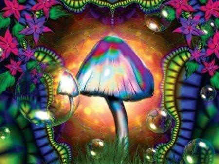 На выборах президента США в Вашингтоне узаконили галюциногенные грибы