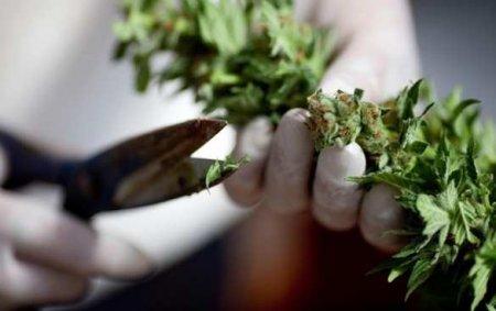 Конгресс США декриминализовал марихуану