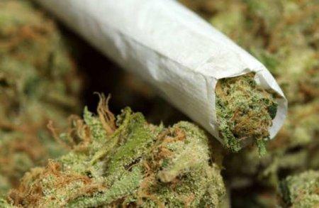 Украина должна стать мировым экспортёром наркотиков, — Карасёв (ВИДЕО)