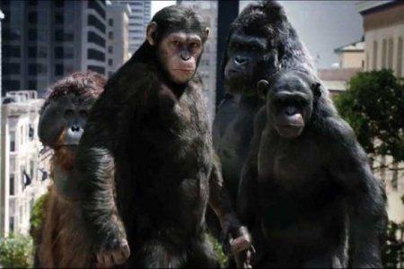 Теперь играет вигры «силой мысли»: Маск чипировал обезьяну