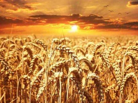 На миллионы тонн меньше: Украина сократила экспорт зерновых