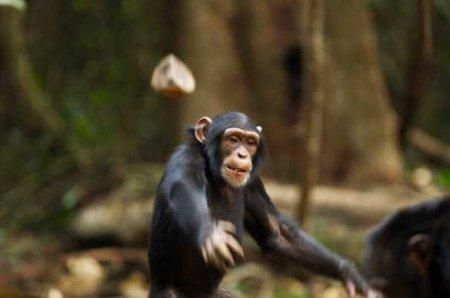 Страшная история: обезьяны похитили двух младенцев и убили одного из них