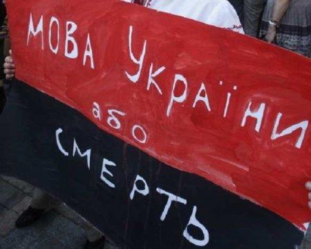 «В Киеве всеговорят по-русски»: 15-летняя украинка жестоко унизила нацистов (ВИДЕО)